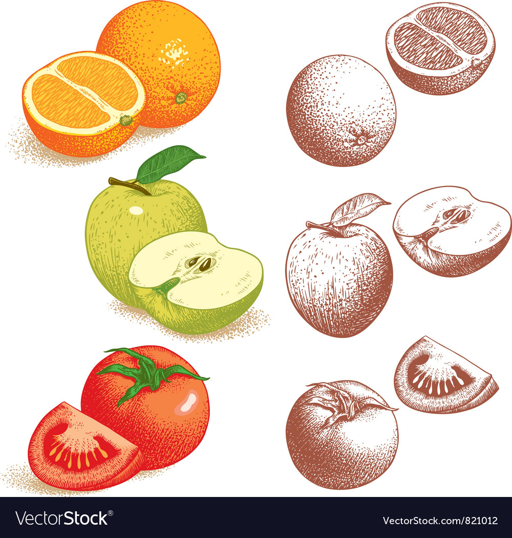 Orange apple tomato vector