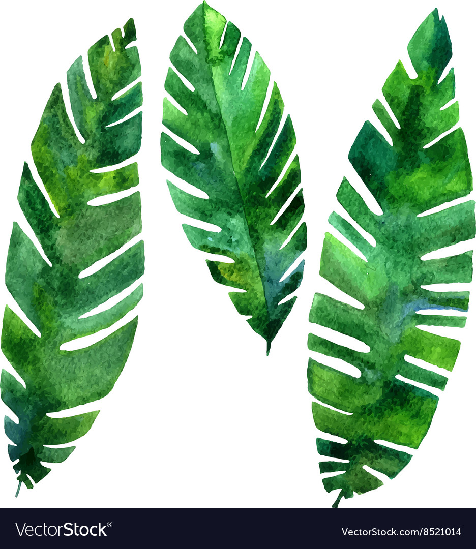 Watercolor green leaves vector