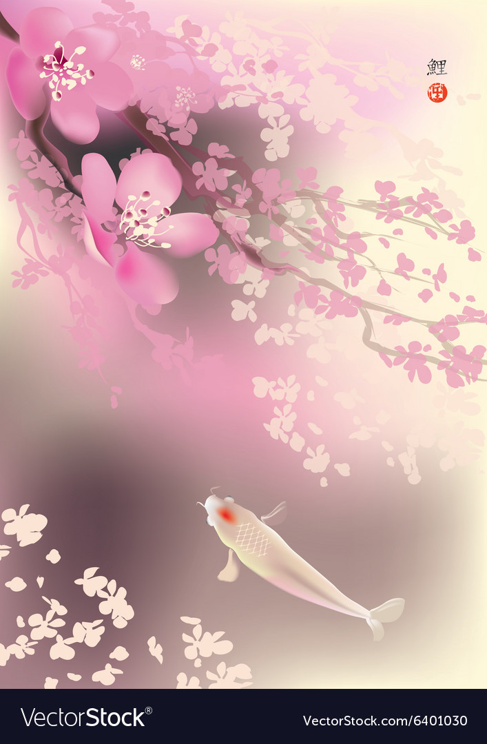 Koi and spring sacura vector