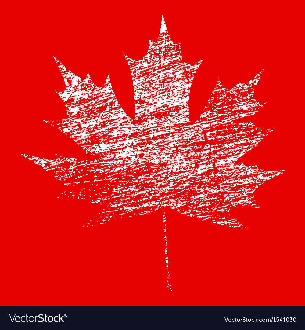 White grunge maple leaf vector