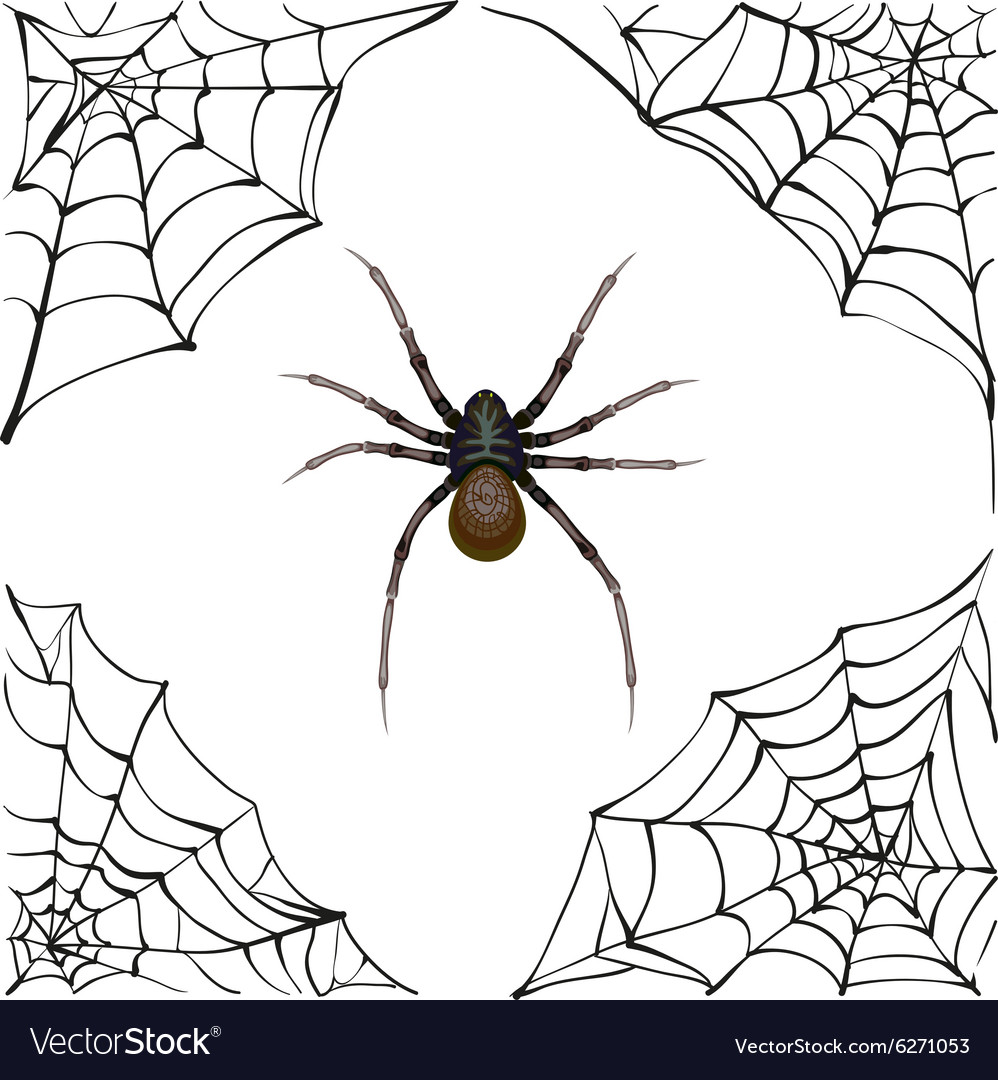 Spiderweb big spider web scary spider of web vector