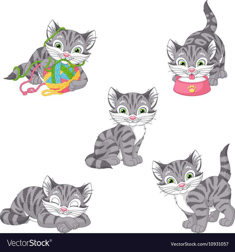 Gray kitten vector