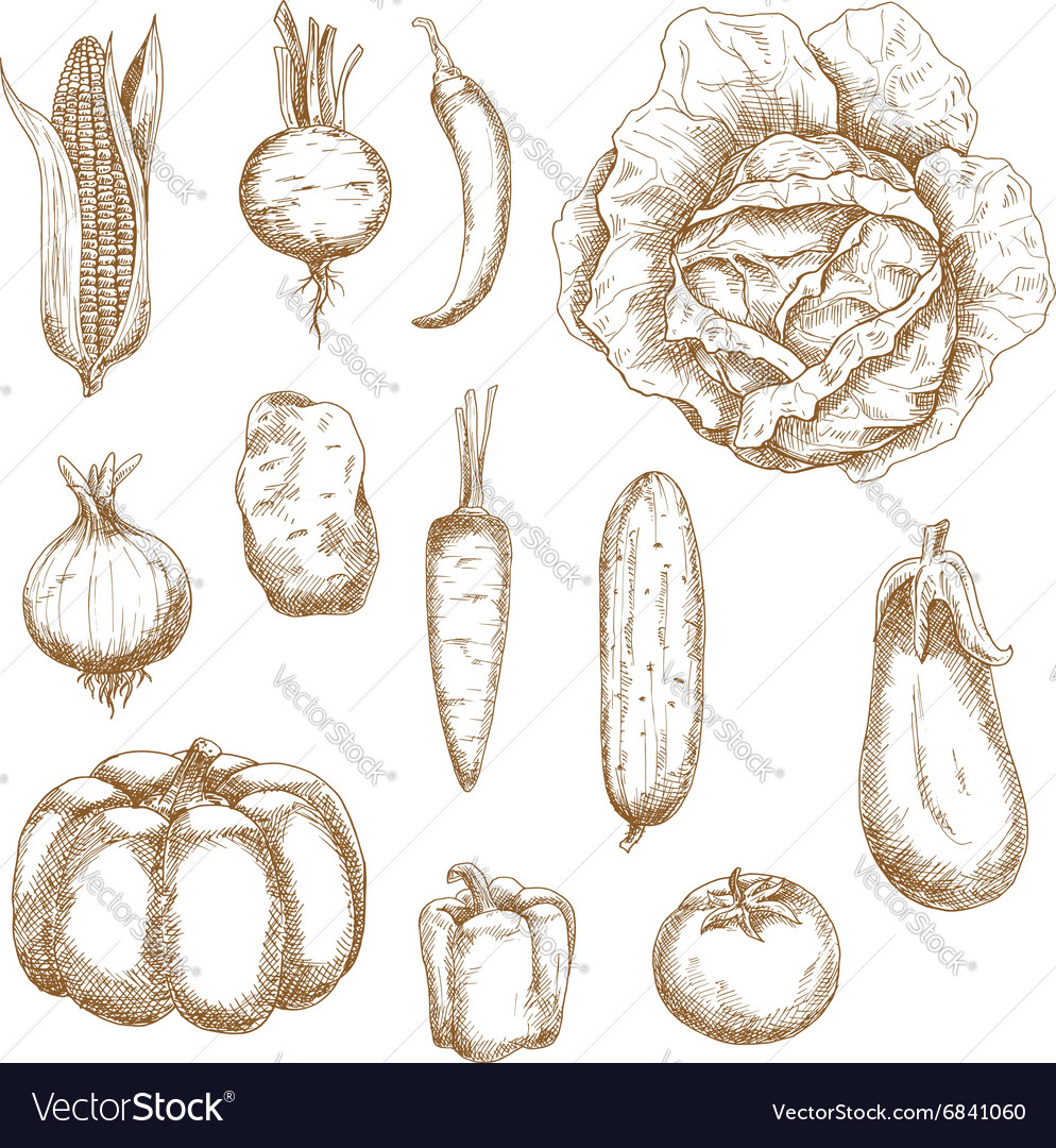 Isolated vegetables in retro sketched style vector