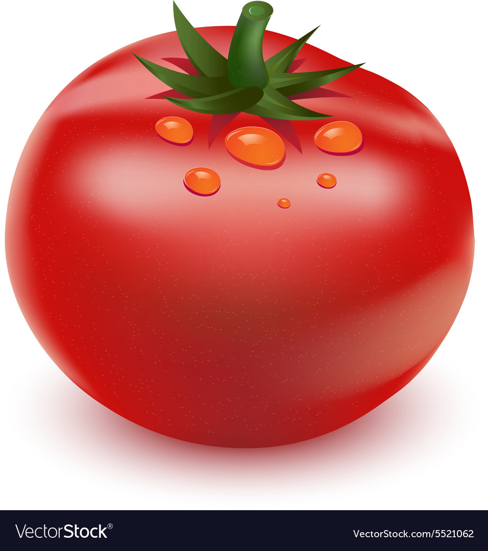 Red big fresh tomato vector