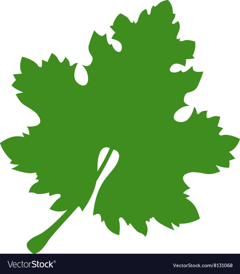 Grapeleaf380x400 vector