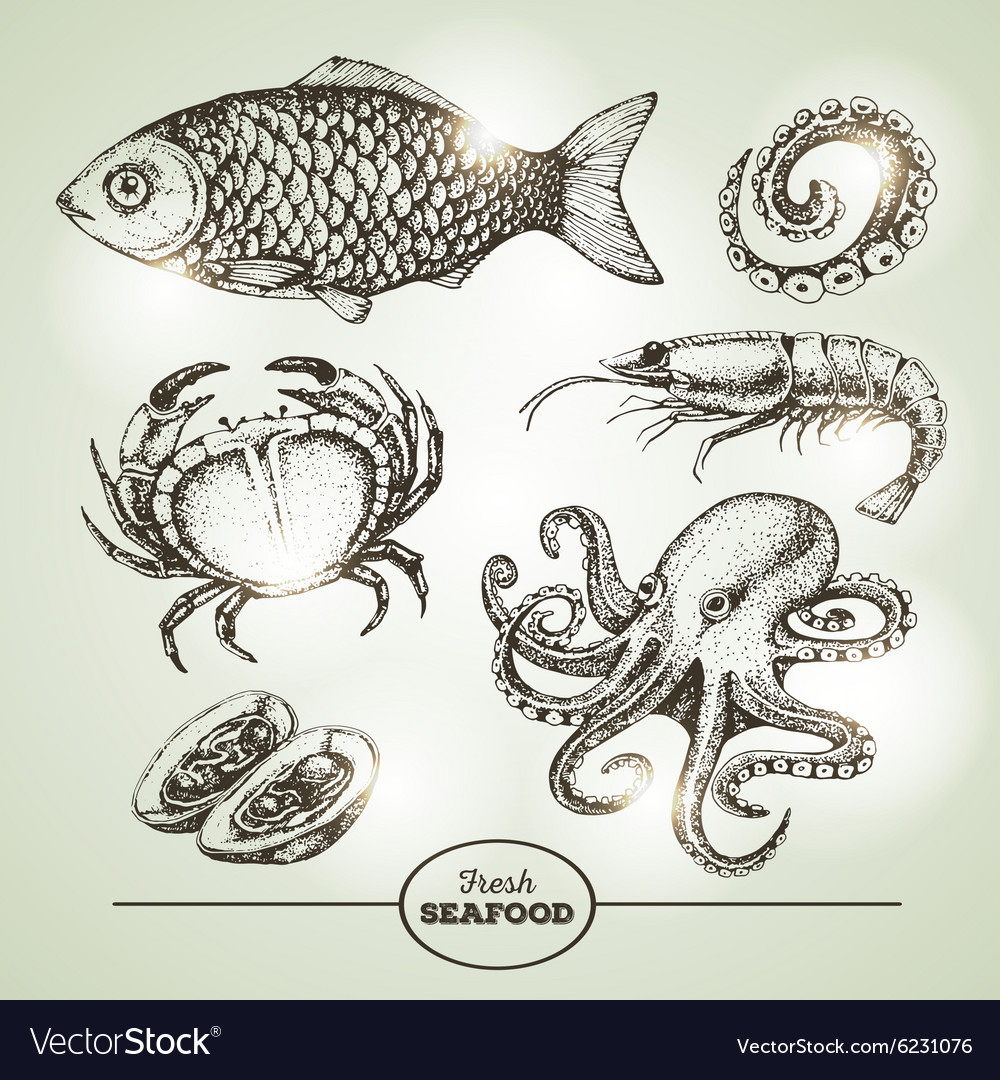 Hand drawing sketch set of seafood vector