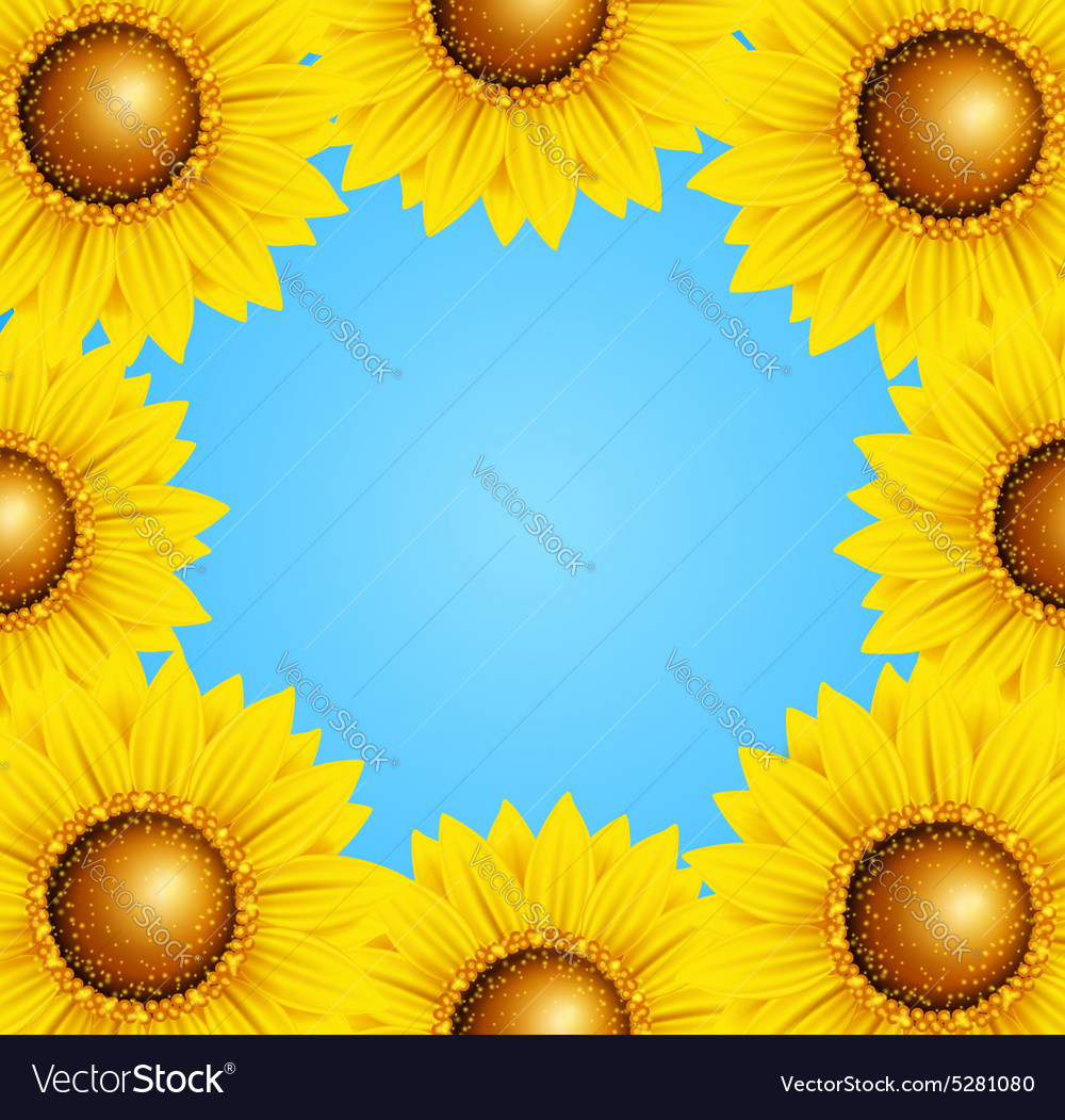 Floral frame with sunflowers vector