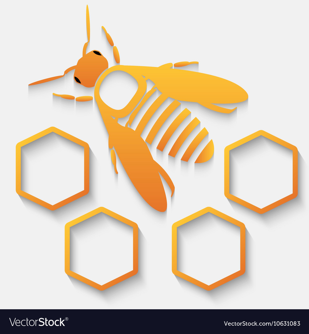 Icon bee and honeycomb vector