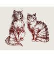 cats sketch vector image