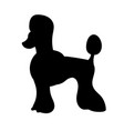 silhouette of poodle isolated on white background vector image