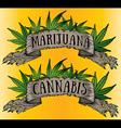 Marijuana cannabis paper parchment design vector image