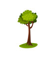 green abstract tree vector image