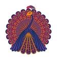 a peacock vector image