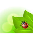 Green background with ladybird vector image