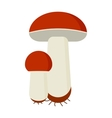 Mushrooms cartoon on white vector image