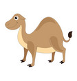 cute brown camel vector image