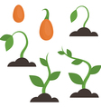 Growth of a plant vector image vector image
