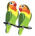cartoon fischer lovebirds vector image