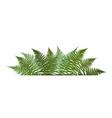 fern leaf background with white fram vector image