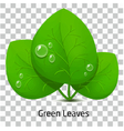 Green leave and drop rain vector image