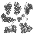 Set of grapes leaves and branches vector image
