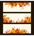 Autumn Banners with Leaves Chestnuts and Ripe vector image