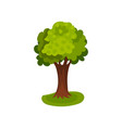 green tree with round crown vector image