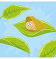 snail on leave vector image