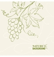 Grape wine card vector image