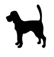 silhouette of beagle isolated on white background vector image