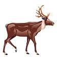 Brown Deer vector image