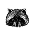 Concept hand drawn cute raccoon Design template vector image