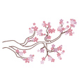Blooming Sakura Branch2 vector image