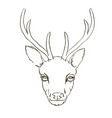 deer sketch animal vector image
