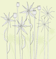 Meadow weeds and poppies silhouettes vector image vector image