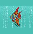 freshwater angelfish aquarium fish vector image