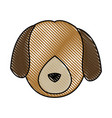 head dog animal pet domestic image vector image