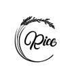 rice plant with hand written lettering vector image