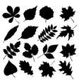 set of black silhouettes of leaves on white vector image