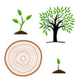 set stages of tree growth from the germ to the vector image