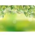 Fresh green leaves EPS 10 vector image