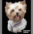 coloful portrait of yorkshire terrier vector image