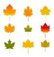 Set of five red and yellow maple leaves isolated vector image
