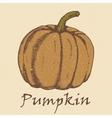 Hand drawn sketch pumpkin vector image