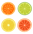 Citrus set isolated on white vector image
