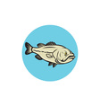 Largemouth Bass Fish Side Circle Cartoon vector image vector image
