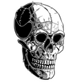 skull lines vector image vector image