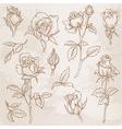 Flower Set Detailed Hand Drawn Roses vector image