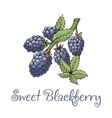 Blackberry sticker with branch and leaves vector image