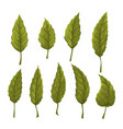 set of green leaves on a white background vector image